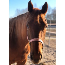 pferde-halfter rosa