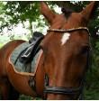stirnriemen pferd pastell